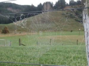 Spider's web with dew on it